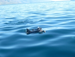 Un matin en partant à l'îlot Hienga ... Cliquer pour agrandir