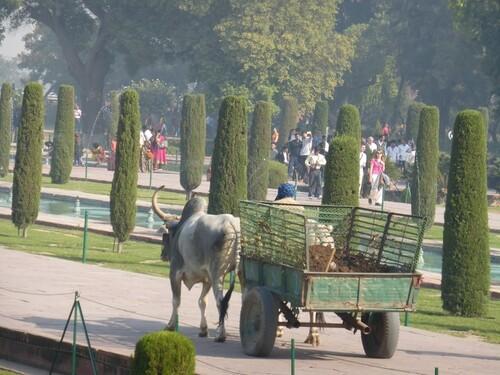 Inde 2014- Jour 11- Le Taj Mahal.