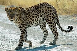 Les animaux d'Afrique (2)