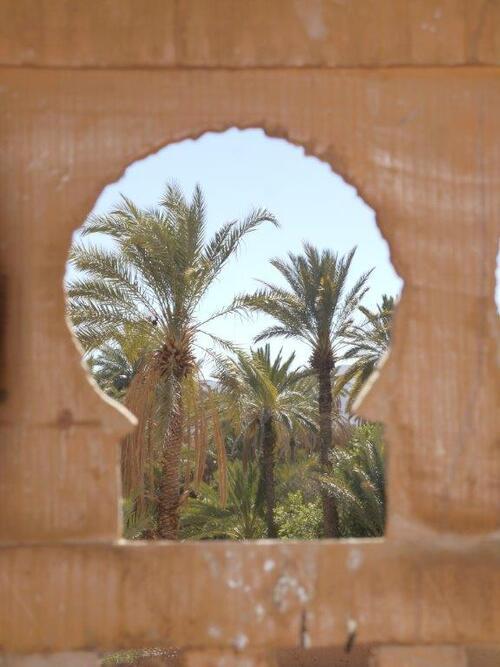 Vue sur la palmeraie par le moucharabieh