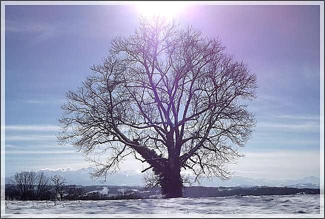 L'arbre majestueux