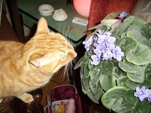 doly aime les fleurs!