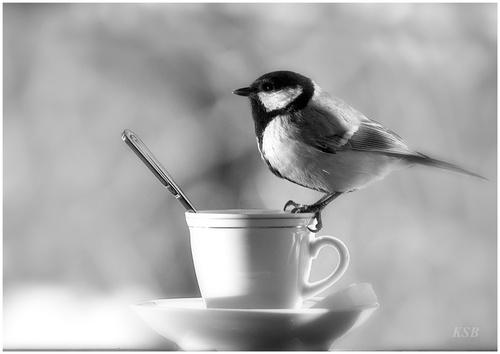 images noir et blanc
