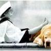 chien2.jpg