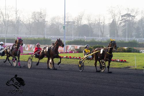 Prix des Vosges