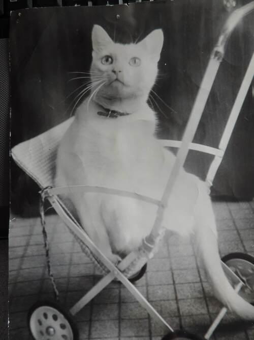 Petite histoire des chats de la famille...