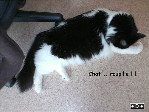 chat-roupille.jpg