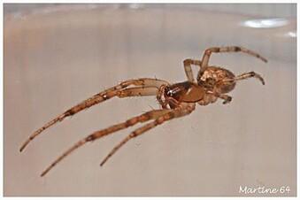 Arachnides 04 7913