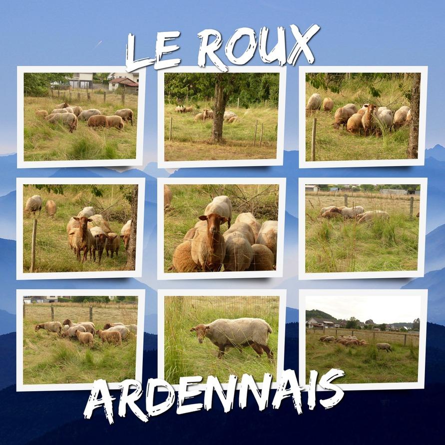 Le Roux Ardennais