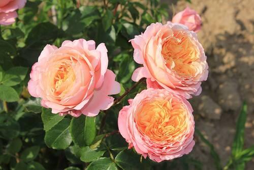 Jour J pour l'édition de printemps 2017 des Journées des Plantes de Chantilly...