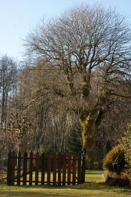 Le Pays des mille Etangs - Haute Saône - arbre - barrière