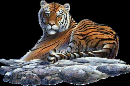 tube tigre 4