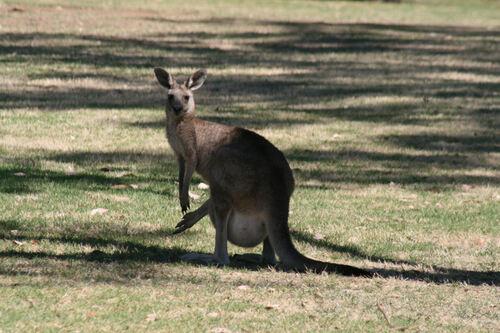 Le point kangourou