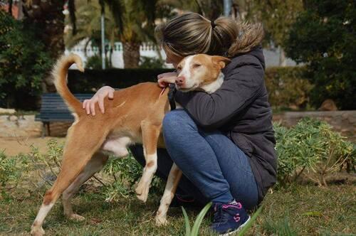 Chico Urgence en Espagne, recherchons accueil ou adoptants ! SOS