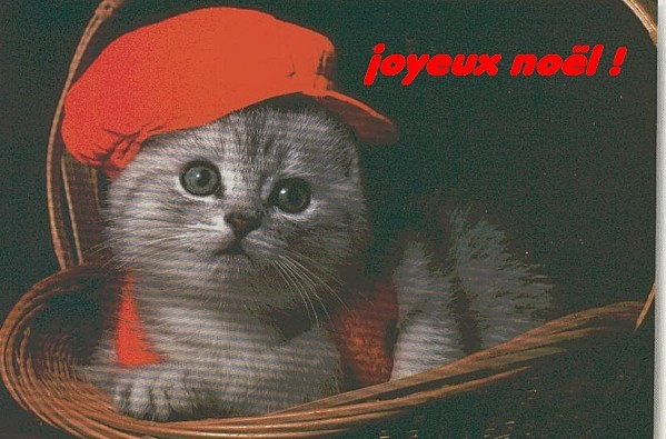 chat-joyeux-noel-copie-1.jpg