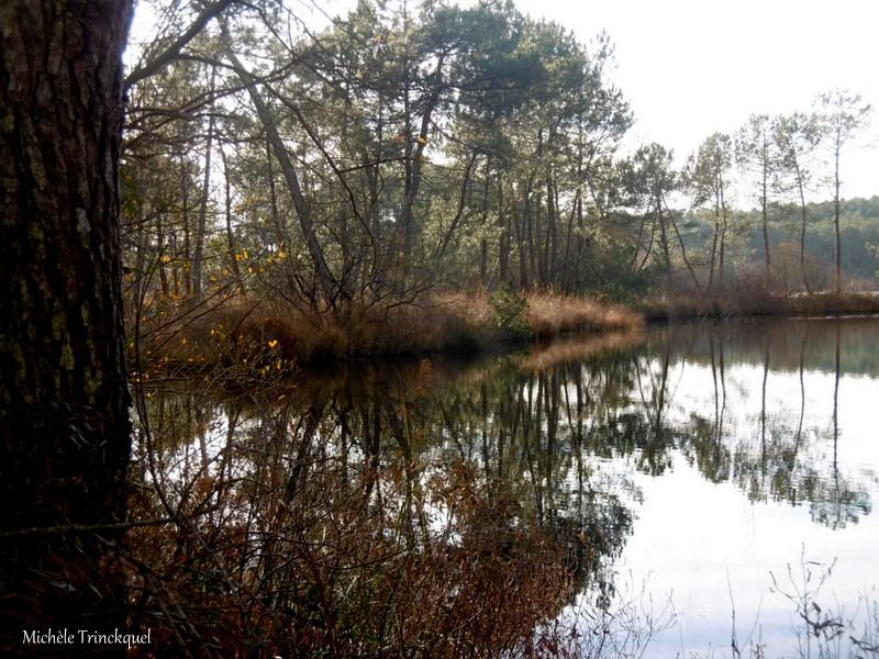 Une balade à l'Etang du Paludot à LEON (40), le 18 décembre (suite)...