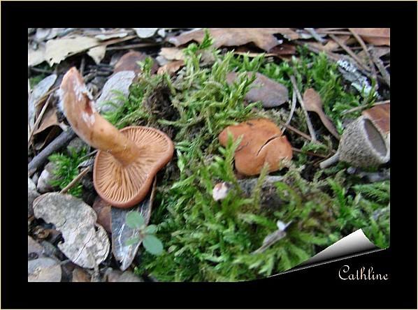 champignon-3.jpg