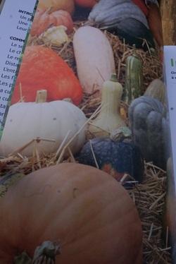 Courges, melons, concombres, etc...