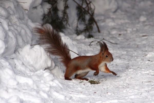 La neige embellit la nature