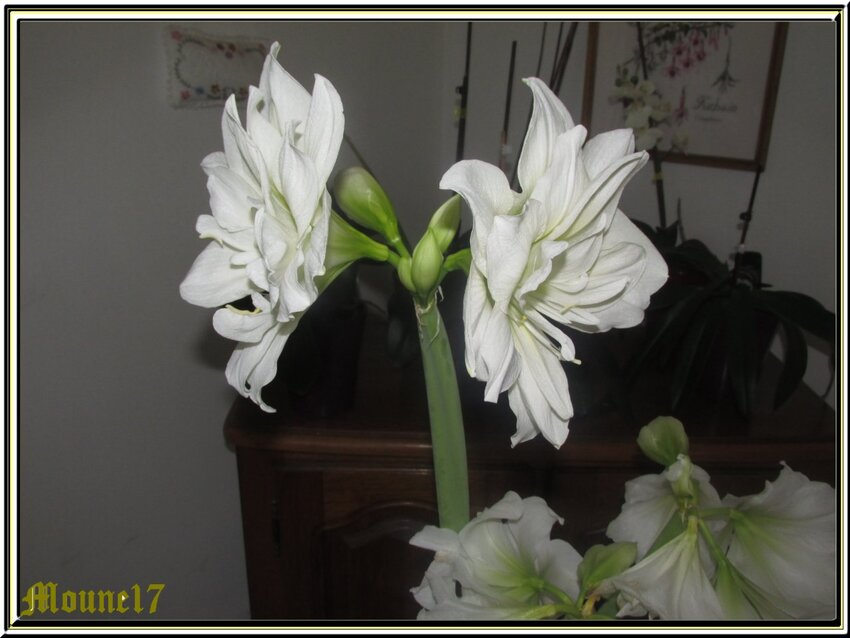 Après les fleurs du jardin, celles de la maison