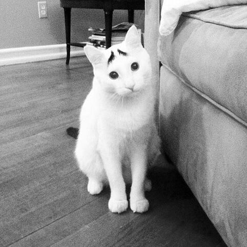 cat-markings-1-2_resultat