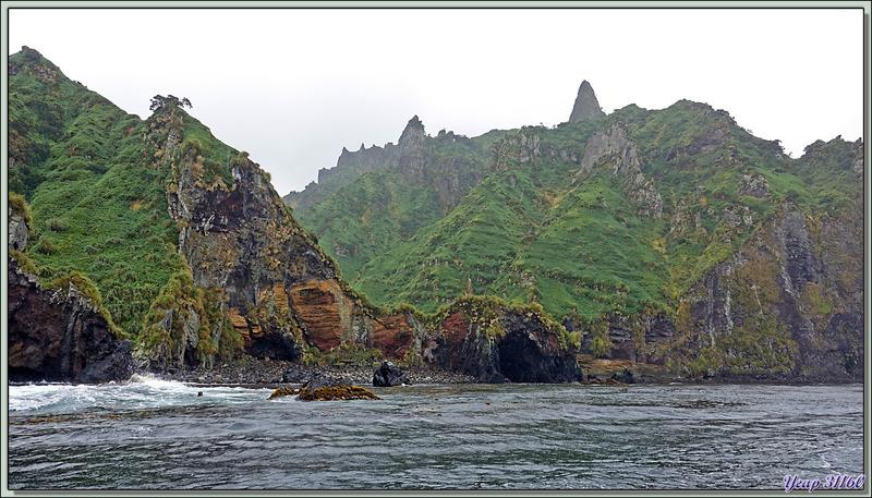 De retour à Archway Rock - The Glen - Gough Island - Tristan da Cunha