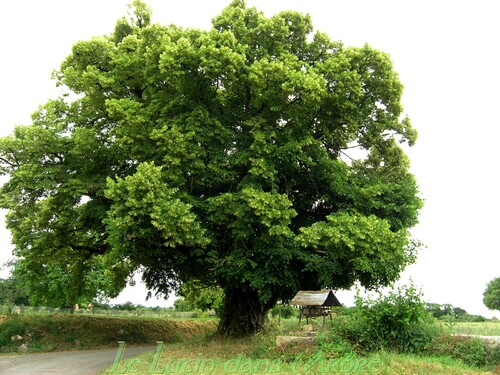 L'arbre du bonheur