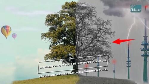 5G : la mort des arbres
