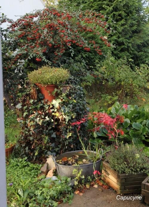 jardin-d-automne 1270