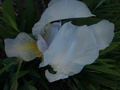 fleurs-005.jpg