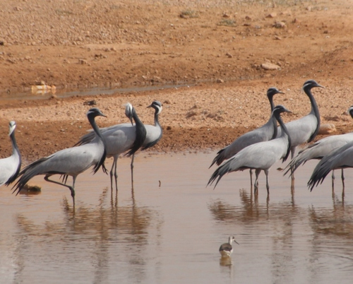 De Gajner à Jaisalmer.