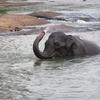 Orphelinat des éléphants - SL