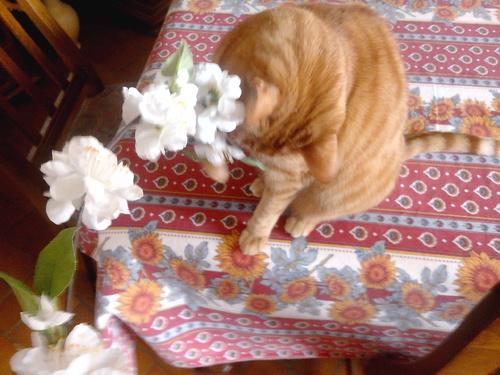 Fleurs blanches !!