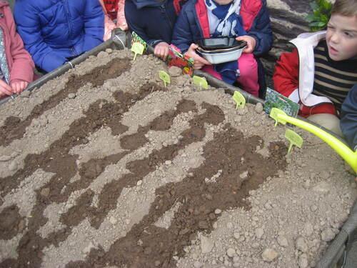Des semis dans notre potager.