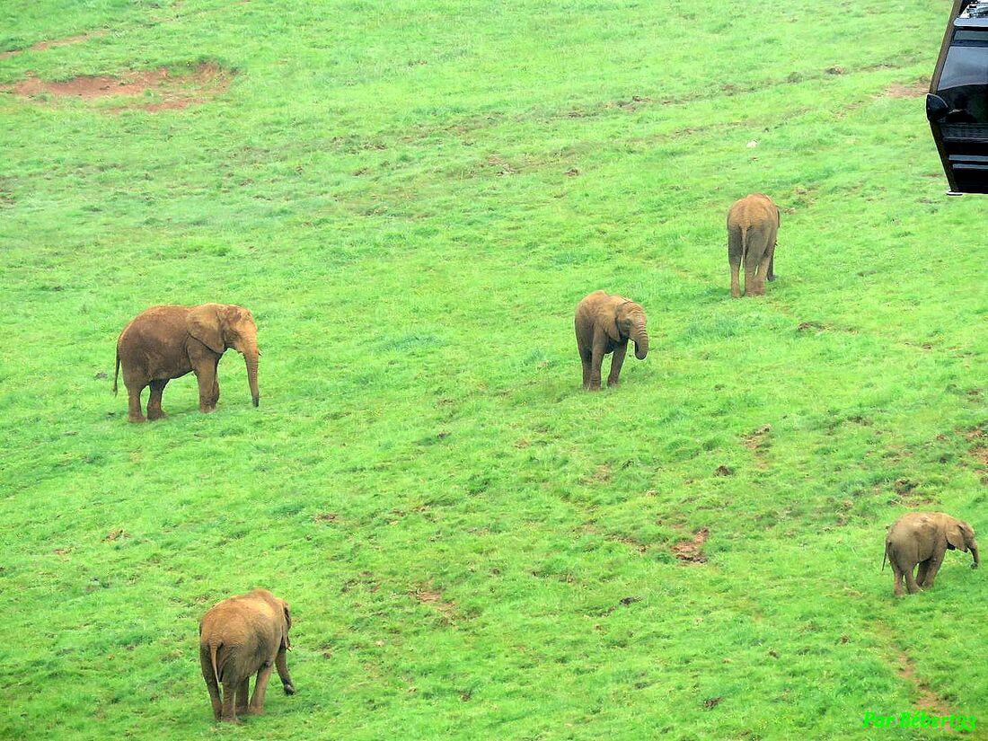 des animaux à Cabarceno