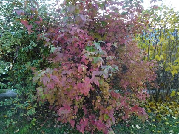 Variations de couleurs de novembre
