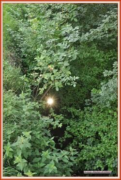 Reflet du soleil dans la Ligoire
