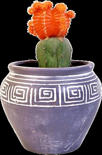 Fleurs en Pot Série 6