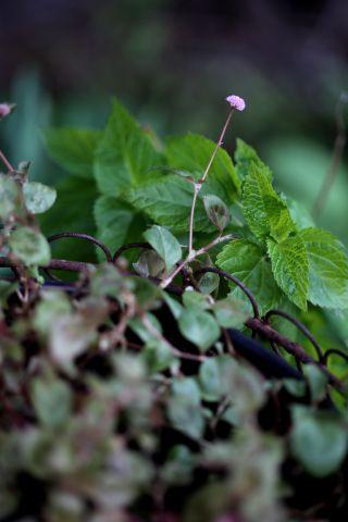 Le jardin comme exutoire (2)
