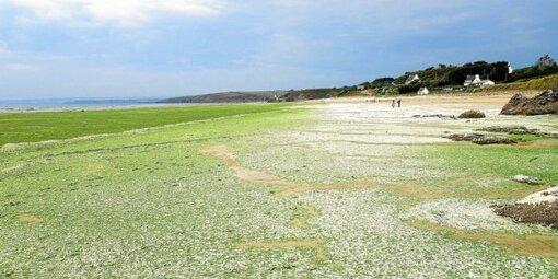 La plage de Trezmalaouen mercredi 12août.