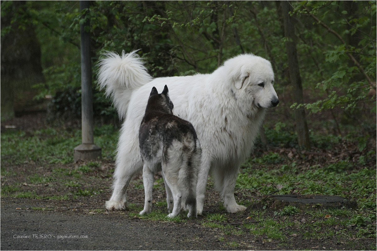 Les chiens au bois de la Bâtie, Genève