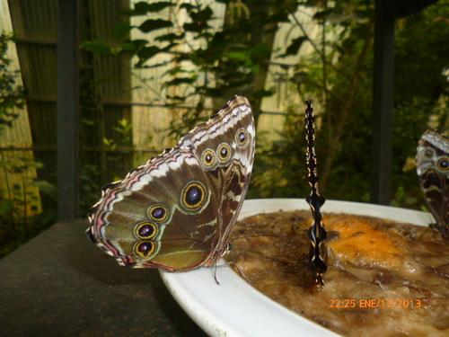 Jardin aux papillons à SANTA ELENA