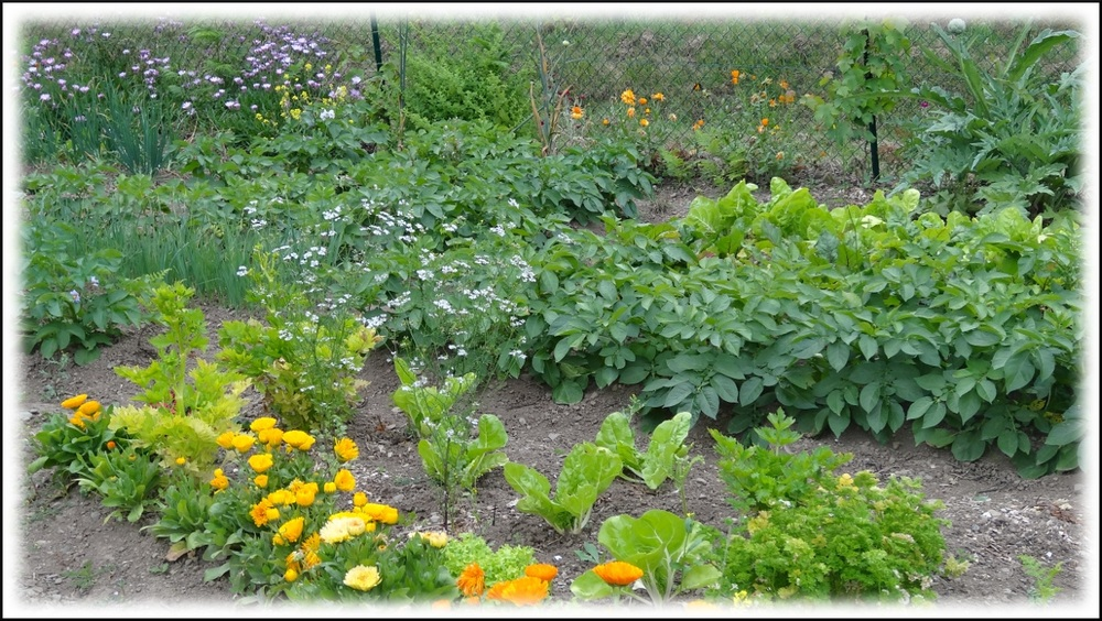 Bienvenue dans mon jardin !
