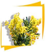 mimosa.jpg
