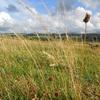 Plateau de la Ribeyrette, Riom-ès-Mgnes8