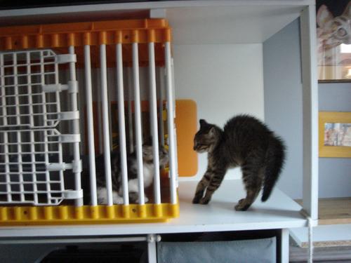 THELMA, nouvelle petite tigrée