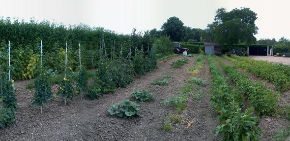 Panorama potager familiale