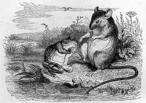 la grenouille et le rat 2