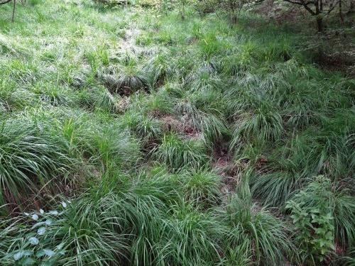 Le marais tufeux des Brosses
