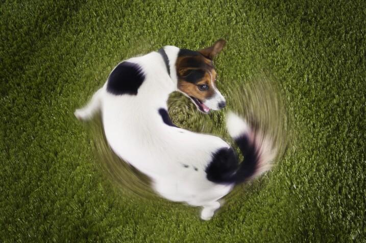 ThinkstockPhotos 77740151 1024x680 10 comportements fréquents chez les chiens expliqués